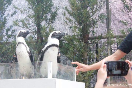 アクアパーク品川のペンギンショー