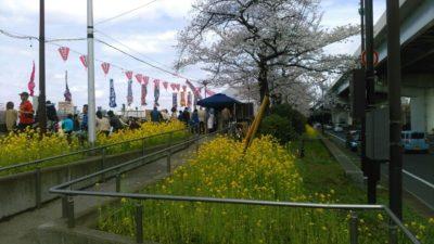 隅田公園 お花見