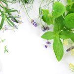 フェンネルとは?味や香り・効能・食べ方・育て方を解説!
