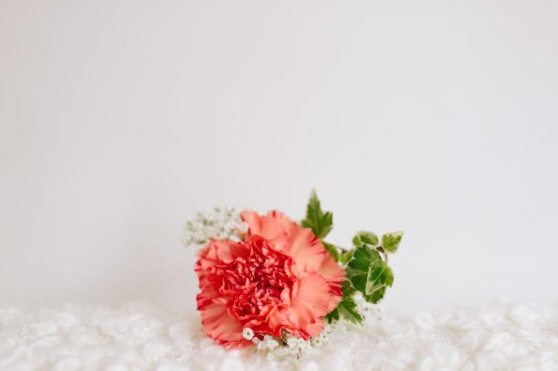 カーネーションの花が咲かない理由!対策&咲かせる方法は?