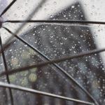 高知の日曜市は雨でも大丈夫?楽しみ方をご紹介!
