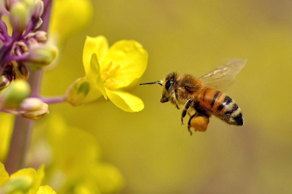 【夢占い】蜂に刺される夢の意味