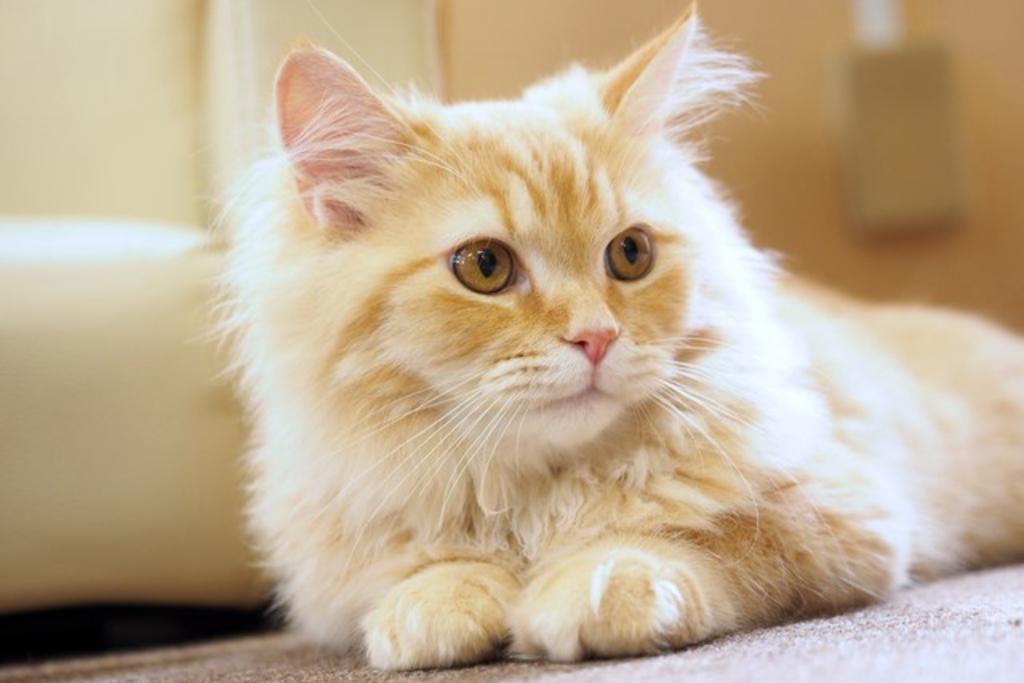 【夢占い】猫の夢は身近な女性の化身!?夢の意味を猫の色で徹底分析