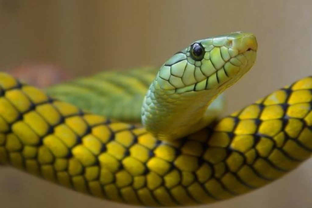 【夢占い】蛇の夢・毒蛇に噛まれる夢の意味