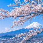 【夢占い】桜の夢の意味は「終わり」の前触れ