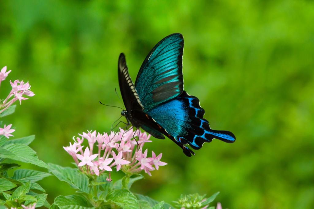 【夢占い】蝶の夢の意味は変化や愛情!?