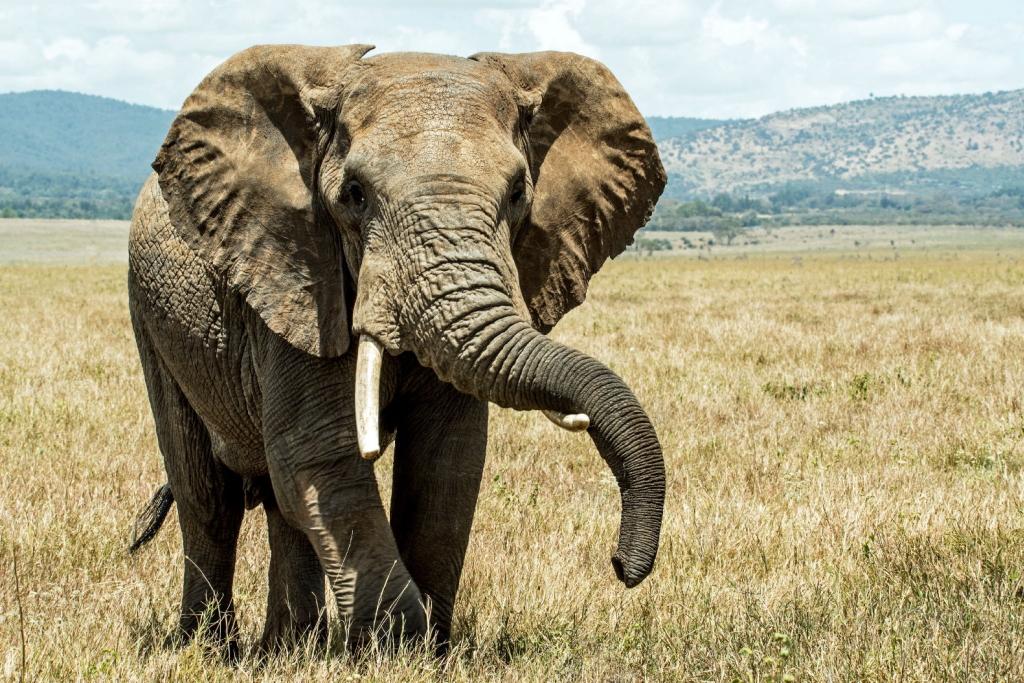 【夢占い】象の夢の意味はみなぎるパワー!?夢占いの意味は?