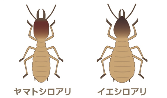 シロアリの種類